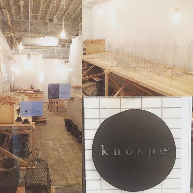 knospe